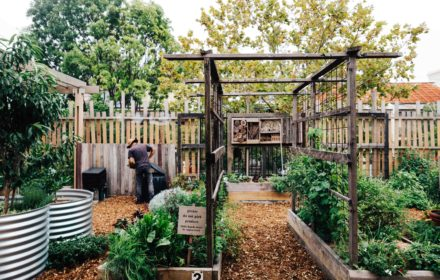 Pocket City Farms